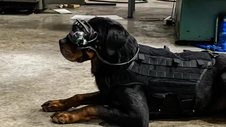 Wojsko testuje gogle rzeczywistości rozszerzonej w wersji dla psów